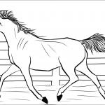 Koń arabski - klacz