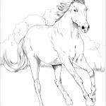 Mustang - klacz