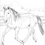 Holenderski koń gorącokrwisty