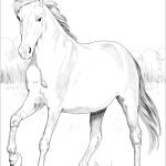 Mustang Hiszpański