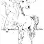 Egipski koń arabski