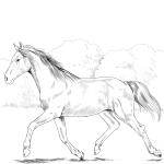 Koń holsztyński