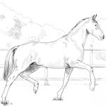 Koń oldenburski