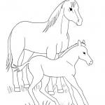 Dorosły koń i źrebię
