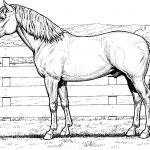 Koń stojący przy ogrodzeniu