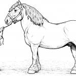 Koń rasy Clydesdale