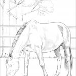 Duński koń gorącokrwisty