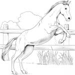 Koń angloarabski