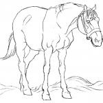 Koń na polu