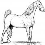 Klacz rasy American Saddlebred