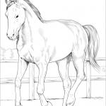 Koń westfalski