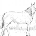 Koń gorącokrwisty - klacz