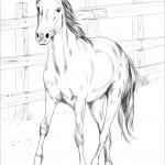 Mustang Kiger