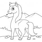 Cute Wild Horse