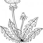 Dmuchawiec
