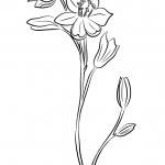 Cebulica