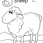 Letter S is for Sheep