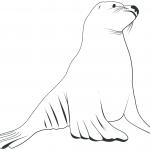 Kontur lwa morskiego