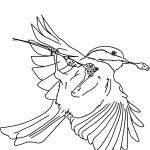 Sikora jasnoskrzydła